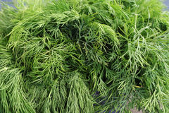 Bunch of dill is large Royalty Free Stock Images