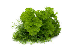 Bunch of dill and parsley. On white royalty free stock images