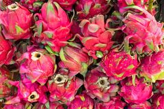 Bunch of dragon fruit on the market in Java Indonesia. Asia Royalty Free Stock Image