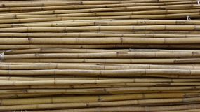 A bunch of dried bamboo stock photography