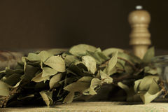 Bunch of dried bay leaves Stock Photos
