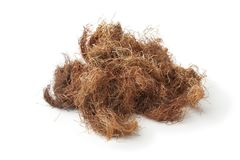Bunch of dried corn silk. On white background Stock Photo
