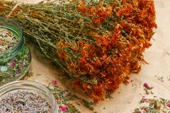 Bunch of dried Hypericum, glass jars with lavender and tea mix. Bunch of dried flowers, Hypericum, phytotherapy herbs tutsan and glass jars with herbs lavender royalty free stock photos