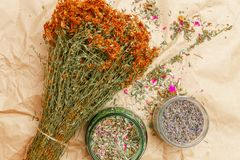 Bunch of dried Hypericum, glass jars with lavender and tea mix. Bunch of dried flowers, Hypericum, phytotherapy herbs tutsan and glass jars with herbs lavender royalty free stock photography