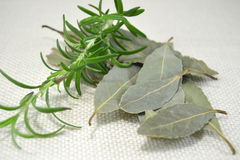 Bunch of dried herbs Royalty Free Stock Photos