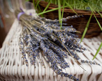 Bunch of dried lavanders. At rustic home Royalty Free Stock Image