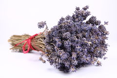 Bunch of dried lavender Stock Image