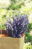 Bunch of dried lavender in craft shopping bag Royalty Free Stock Photo