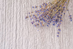 Bunch of dried lavender flower on white background, product photography for aromatherapy Royalty Free Stock Photography