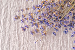Bunch of dried lavender flower on white background, product photography for aromatherapy Stock Photos