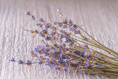 Bunch of dried lavender flower on white background, product photography for aromatherapy Royalty Free Stock Photos