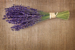 Bunch of dried lavender flowers Stock Photos