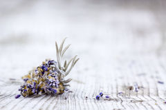 Bunch of dried lavender Royalty Free Stock Photography