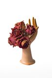 Bunch of dried roses in a porcelaine hand Royalty Free Stock Photos