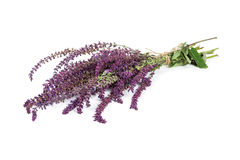 Bunch dried sage royalty free stock photo