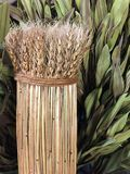 A bunch of dried wheat straw background Stock Image