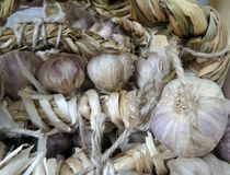 Bunch of dry garlic Royalty Free Stock Images