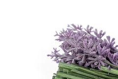 Bunch of dry lavender flowers and grass on white background with copy space stock photo