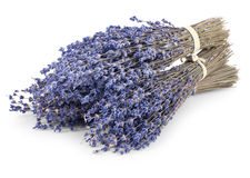 Bunch of dry lavender on white Stock Photography