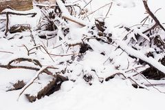 A bunch of dumped branches under the snow. A bunch of dumped branches and snow Stock Photo
