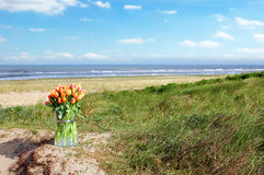 Bunch of Dutch tulips on dune sand Stock Image
