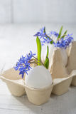 Bunch of early spring flowers. ( Scilla siberica) in eggshells. Shallow depth of field, focus on near flowers. Easter decor royalty free stock photography