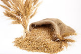 Bunch of ears of wheat Stock Images