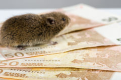 Bunch of 50 EURO bank notes with blurred mouse in the background Stock Photo