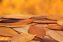 Bunch of faded cherry leaves Stock Photos