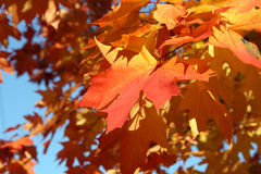 A bunch of fall leaves Stock Photos