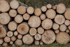 Bunch of felled. And cut trees Stock Photo