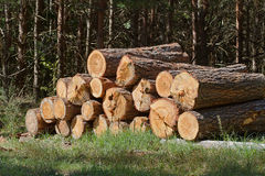 Bunch of felled trees. Near a logging site waiting to be driven away Stock Images
