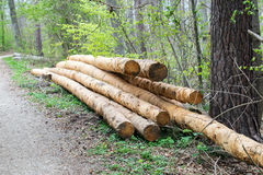 Bunch of felled trees near a logging site waiting to be driven away Stock Photography