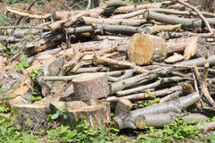 Bunch of felled trees Royalty Free Stock Photos