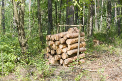 Bunch of felled trees Stock Photography