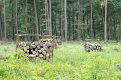 Bunch of felled trees Royalty Free Stock Images