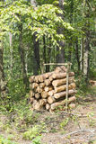 Bunch of felled trees Stock Photos