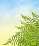 Bunch of fern, corner border, on blue sky background Stock Images