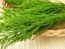 Bunch of field horsetail Stock Photo