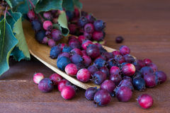 Bunch of first. Wild autumn berry, Saskatoon in front of dark wooden background Stock Images