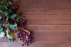 Bunch of first wild autumn berry Stock Photos