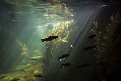 Inside of an aquarium. A bunch of fish in an aquarium Stock Photography