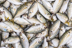 A bunch of fish. On fish market. Vietnam Royalty Free Stock Photos