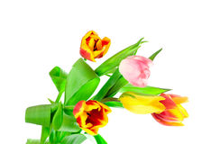 Bunch of five tulips stock photos