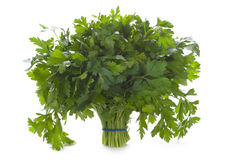 Bunch of flat leaved parsley isolated. A bunch of flat leaved parsley herb isolated on a white background Stock Images