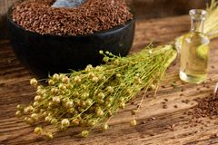 Bunch of flax dried flower in front of mortar Royalty Free Stock Image