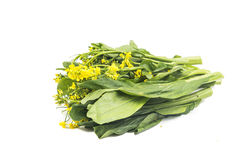 Bunch of floral choy sum green vegetable popular among the Chine Royalty Free Stock Image