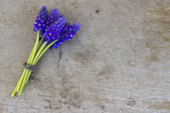 Bunch of flower.Bunch of blue flower on wooden background Royalty Free Stock Images