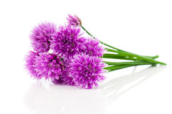 Bunch Flowering onions. Isolated on white background royalty free stock photo