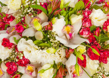 Bunch of flowers. Background texture Royalty Free Stock Images